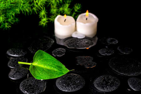 beautiful spa still life of green leaf Calla lily, twig and candles on zen basalt stones with dew in water, closeup photo