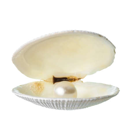 pink pearl: open soft white cockleshell with pearl is isolated on white background, closeup