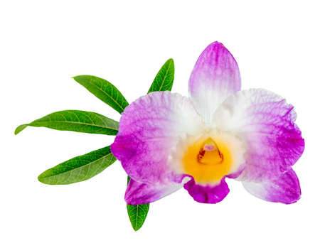 green orchid: dendrobium flower and leaf passionflower is isolated on white background