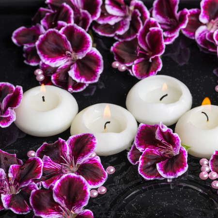 reflection of life: beautiful spa still life of geranium flower and candles in ripple reflection water, Royal Pelargonium, closeup