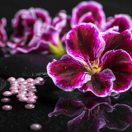 still water: beautiful spa background of geranium flower, beads and black zen stones with drops in reflection water, closeup