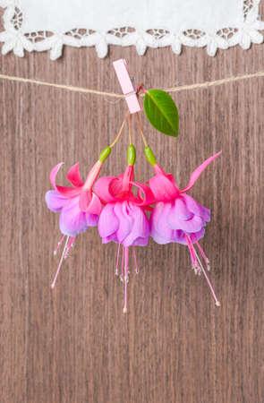 flores fucsia: flores fucsias entrega en cuerda con pinza de ropa en el fondo de madera y encaje servilleta, primer