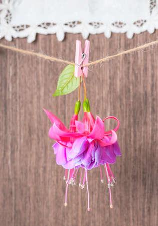 flores fucsia: flores fucsias entrega en cuerda con pinza de ropa en el fondo de madera y bordados servilleta, primer