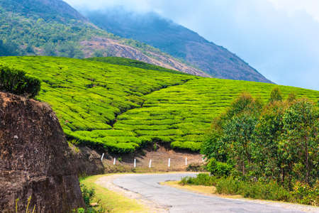 munnar: green tea plantations with road and clouds in the morning, Munnar, Kerala, beautiful India travel background
