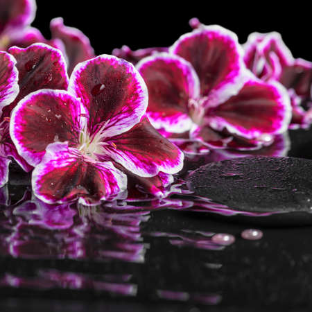 reflection of life: beautiful spa still life of blooming dark purple geranium flower and beads on ripple reflection dark water, closeup Stock Photo