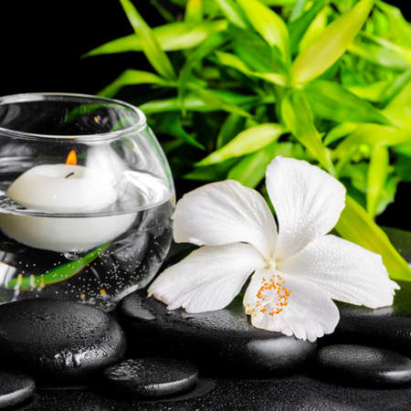 beautiful spa concept of dew white hibiscus flower, bamboo and candles in vase with water on zen stones, closeup photo