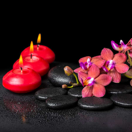 still water: beautiful spa still life of blooming twig red orchid flower, phalaenopsis with water dew and candles on zen basalt stones, closeup