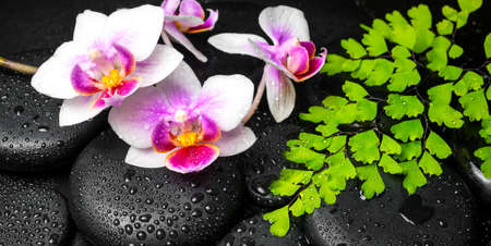 ferns and orchids: Spa background of white with red orchid (mini phalaenopsis) flower, green leaves fern and zen stones with drops, panorama