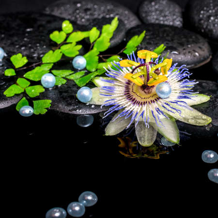 reflection of life: spa still life of passiflora flower, branch fern, zen basalt stones with drops and pearl beads in reflection water, closeup