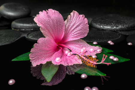 stones in water: spa concept of pink hibiscus flower on green leaf with drops on zen stones and pearl beads in reflection water, closeup Stock Photo