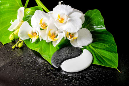 acupuncture: spa concept of white orchid flower, phalaenopsis, green leaf with dew and Yin-Yang of stone texture on black background, closeup
