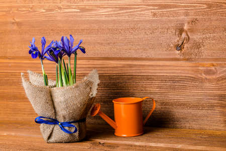 water in can: iris flowers in burlap and water can on wooden background, closeup Stock Photo