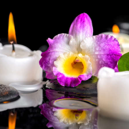 reflection of life: spa still life of purple orchid dendrobium, green leaf with dew and candles on black zen stones in reflection water, closeup Stock Photo