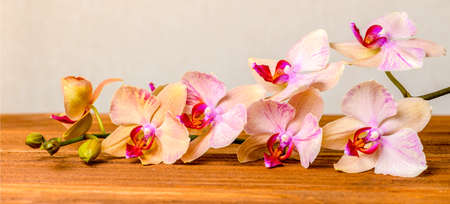 yellow orchid: beautiful composition of blooming twig orchid flower, phalaenopsis on wooden background, panorama
