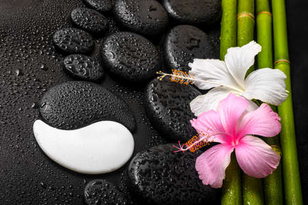 spa background of white, pink hibiscus flower, symbol Yin Yang and natural bamboo on zen basalt stones with dew, closeup