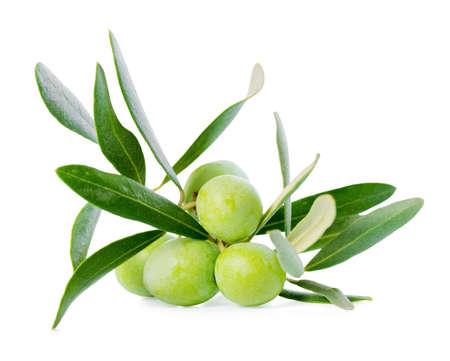 Groene tak van olijfboom met bessen is geïsoleerd op een witte achtergrond
