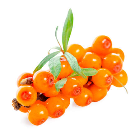 beautiful twig of sea buckthorn berries is isolated on white background 免版税图像