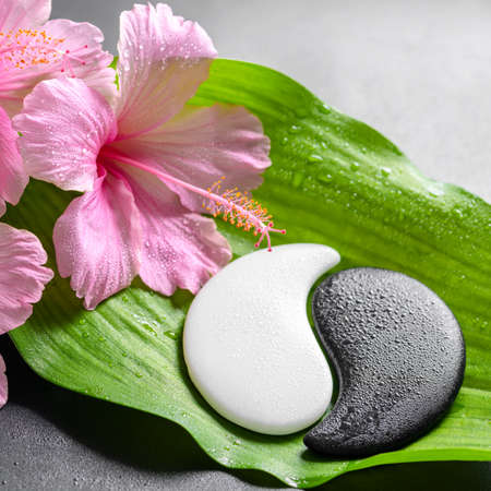 beautiful spa concept of pink hibiscus flowers and Yin-Yang of stone texture on big green leaf with dew, closeup
