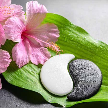mooie spa concept van roze hibiscus bloemen en Yin-Yang van de steen textuur op grote groene blad met dauw, close-up