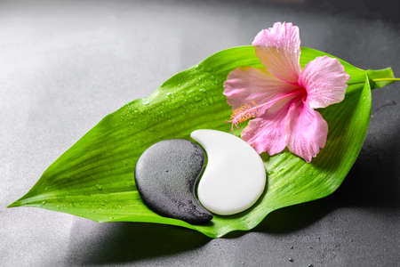 beautiful spa concept of pink hibiscus flower and Yin-Yang of stone texture on big green leaf with drops, closeup