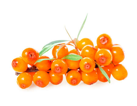 sea buckthorn berries branch is isolated on white background 免版税图像