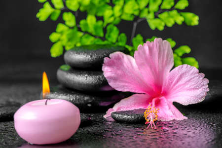 black stones: beautiful spa concept of pink hibiscus flower, fern branch, candle and stones pyramid with drops, closeup