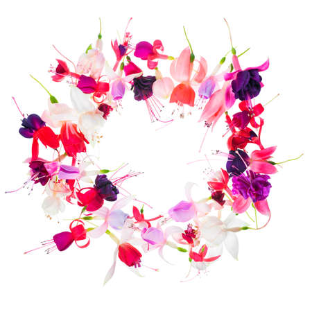 mammy: fuchsia flower wreath with place for your text or image is isolated on white, card for summer or spring designs, closeup Stock Photo