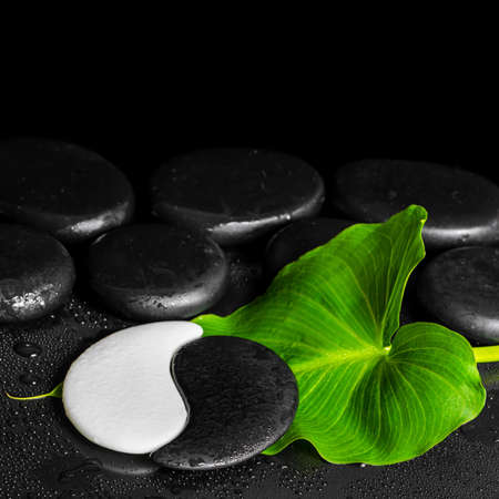 spa still life of Yin-Yang stone texture and green leaf Calla lily with drop on black background with zen stones, close up Stock Photo