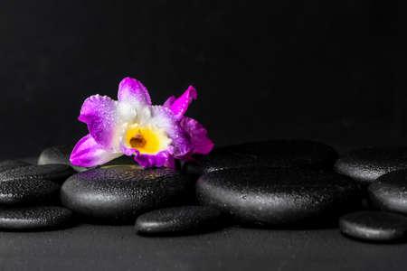 black stones: spa concept of purple orchid dendrobium with dew on black zen stones background, closeup