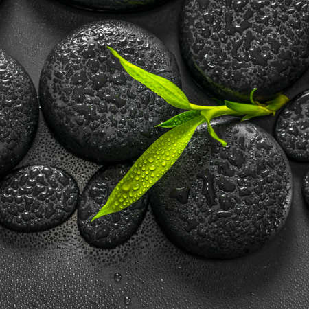 top down: top down closeup beautiful spa composition of green branch bamboo on zen basalt stones with dew