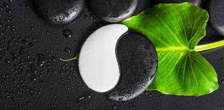 top down of beautiful spa concept Yin-Yang stone texture symbol, green leaf with dew and black zen stones, panorama