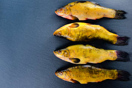 tench: high angle view of fresh tench fish on slate background, close up