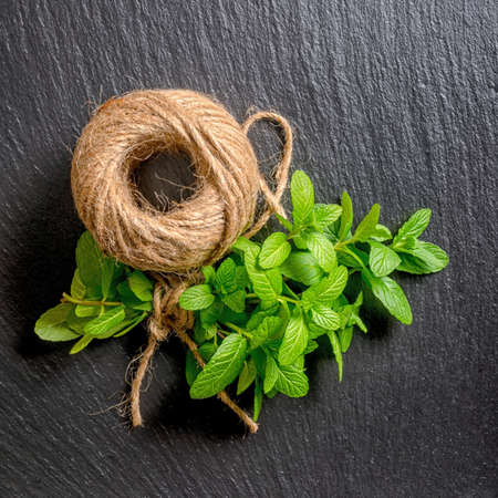 tied down: top down of beautiful bunch fresh green mint tied rope and yarn on black slate background, close up Stock Photo