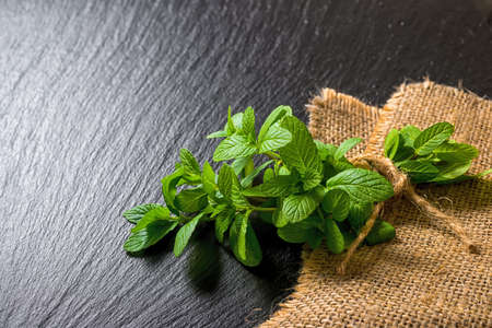 melissa: beautiful pile fresh green melissa officinalis tied twine on slate and jute background, close up Stock Photo