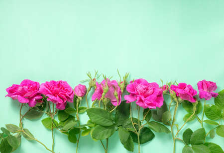 mammy: flat lay of beautiful romantic pink rose flowers with buds and leaves on green background, greeting card, close up