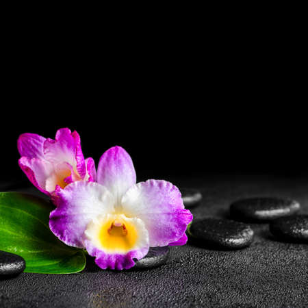 spa still life of purple orchid dendrobium and green leaf Calla lily with dew on black zen stones, closeup