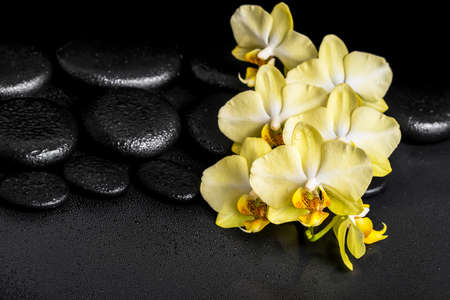 black stones: beautiful spa still life of yellow orchid phalaenopsis on black zen stones with drops, closeup