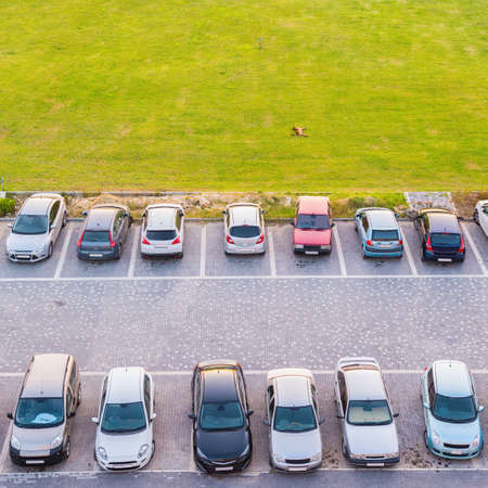 top view of dual parking multi-storey building and dog lying on green lawn Stock Photo