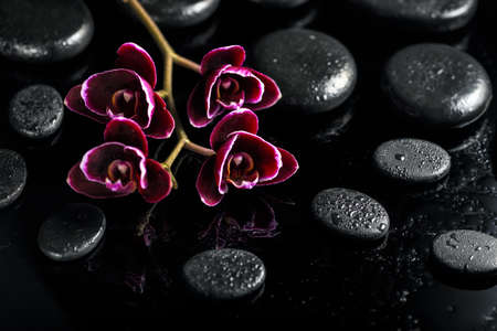 Beautiful spa concept of dark cherry orchid flower on black zen stones with drops