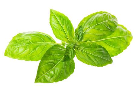 Fresh green twig of seasoning basil isolated on white background, close up Stock Photo