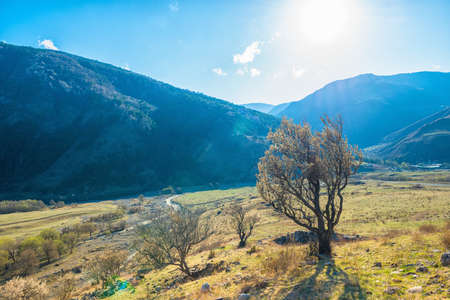 Beautiful landscape with valley and trees of Caucasus mountain peaks, Republic Ingushetia, Russia