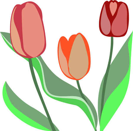 grass close up: tulip flowers. Pink, orange and red