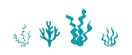 Seaweed collection isolated on white background. Underwater plants silhouettes. Vector illustration.