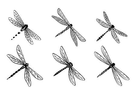 Hand drawn dragonfly set. Cute decorative insects isolated on white background. Vector illustration.