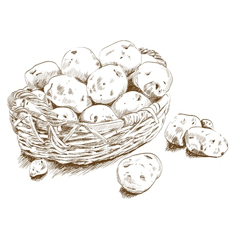 potatoes in a basket Vector