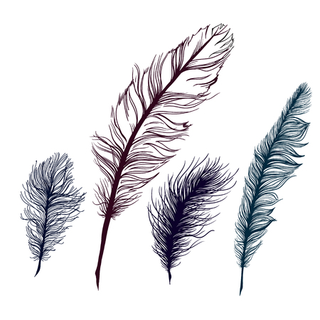 softly: Set of multicolored feathers, isolate. With blue background. Vector