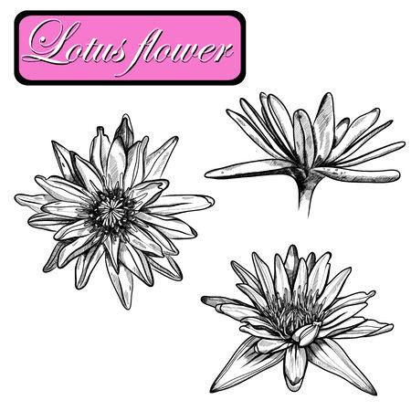 water lilies: Dibujado a mano nen�fares fijan en un fondo. Ilustraci�n vectorial Vectores