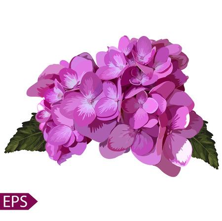 Vector blue realistisch Hortensien, Lavendel. Illustration von Blumen. Weinlese. Kann für Geschenkpapier verwendet werden. EPS Standard-Bild - 39808578