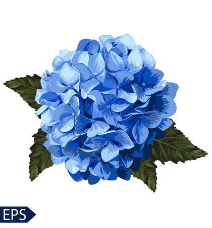 Vector blue realistic hydrangea, lavender. Illustration of flowers. Vintage. Can be used for gift wrapping paper. EPS Çizim