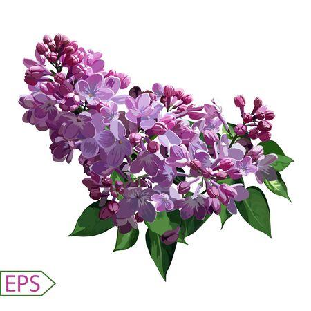 Spring izolate lilac flower for the design. Vector illustration. EPS Ilustracja